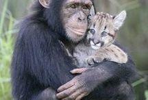 Maymunlar Ve Goriller