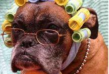 Animaux déguisés - concours photo Verlina / Découvrez les animaux déguisés de notre concours photo ! #chat #chien #cheval #lapin participer à nos concours photo mensuels et tentez de gagner un bon d'achat sur verlina.com !