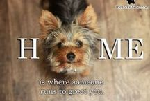 Doggies /  Home made food, health and training advices, funny pics, DIY