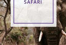 Auf Safari / Ihr habt genug vom lauten Stadtleben und wollte einfach mal wieder weg von allem? Dann nichts wie auf zur Safari. Was ist Euer ultimativer Safari-Tipp? Eure Antworten würden wir gerne in einem extra Beitrag veröffentlichen.  http://www.holidayextras.de/destinationen/safari-in-afrika-einmaleins.html