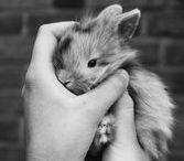 Lapins trop craquants ! / Verlina a sélectionné les photos de lapins les plus mignons !