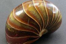 Shell,corel,Sealife,shellfish / by Gwendolyn Johnson