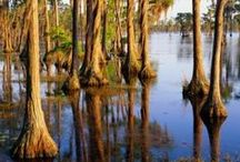Louisiana - a Fun Fishing and Foodie's Paradise / We offer affordable lodging plus a good night's sleep in Louisiana.