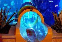 Aquarium / Aquarium Aquarium-Hotel-room-restorant Acquari risroranti