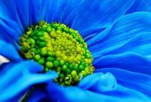 pięknośći / o pięknych kwiatach