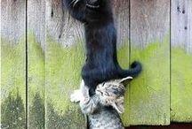kikusie / o małych kotkach,kikusiach