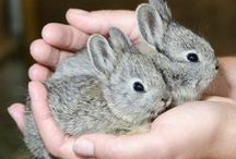 sweet life animals / o słodkim życiu zwierząt