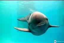 przyjacielskie delfiny / o przyjacielskich delfinach