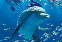 śmieszne delfiny