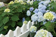 Charming Picket Fences / We made Cottage Journal's special issue of Cottage Gardens!   Take a peek at some of our favorite picket fences in the Gorham's Bluff community.   www.gorhamsbluff.com / by GorhamsBluff
