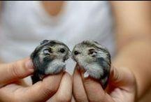 Hamsters <3