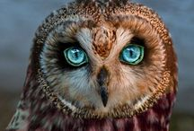 Owl out everything / by Yolanda Saez