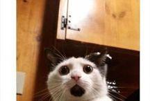 dziwne koty / Tablica przedstawia dziwne lecz śmieszne koty :)