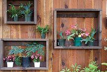 Garden / Sweet gardens...