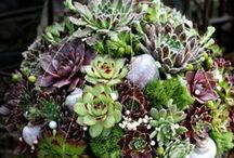 Succulents / Everything succulents. How & where to plant them & creative ways to display them.