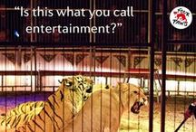 Wild animals don't belong in circus! / FOUR PAWS is calling for a ban of wild animals in circuses! In many countries, wild animals are still used for entertainment purposes. For us it may be fun, for them it is torture! Let's stop this suffering! www.vier-pfoten.de/bruellen