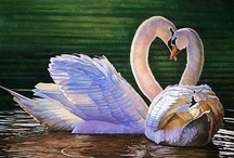 Swans / by Mary Acree