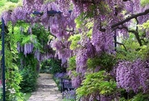 garden & open air space