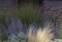 Inspo Gardens / Modern, naturalistic planting