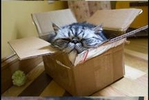 Cats in Boxes. Seriously! / Cats in Boxes. Find funny photos of cats in boxes. That's it. Seriously!