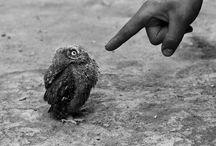Owls / Simply cute!
