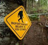 "Bigfoot. I Seen Sasquatch! / Bigfoot. We found Sasquatch! I SEEN 'EM! Find humorous Bigfoot sightings, Bigfoot jokes, Sasquatch humor, ""Finding Bigfoot"" memes, the Abominable Snowman, Yeti, and even Wookies because we don't know what they are either. Why is Bigfoot plural: Bigfoots?"