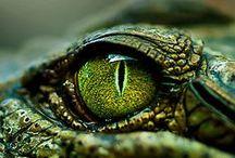 Reptiles, amphibians, snails