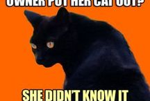 Funny Cat Memes / Funny cat riddles to mew about, meow-valous feline humor, kitty comedy and hiss-terical cat jokes.