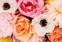 Annie Wedding / by Sarah Welling