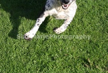 SianMarieAnimalPhotography / I love animals, these are all photos I have taken, enjoy :) / by SianMarie Hurst