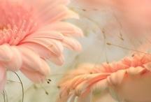 Peachy Pink Love
