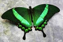 butterfly / by maya elsakka