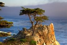 Discover: California