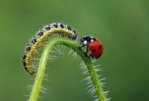 *** P'TITES BESTIOLES *** / Insectes, araignées,papillons, escargots, grenouilles etc....   / by *** Chirine ***