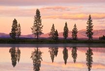 Lodgepole Pine / by QuietPixel