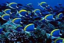 *** OCÉAN *** / Récif corallien  / by *** Chirine ***