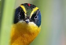 Birds / Aves
