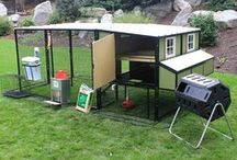Chicken Coops / chicken condos has many style and sizes for you flock