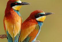 Pretty birds / I like this birds