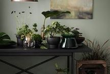 COOL HOUSE PLANTS / I love plants, yeah sure they're hot on trend at the moment, but that's not why I love them. Plants instantly inject texture and colour into your interior, purify the air and welcome good energy into your home as long as they are kept in good knick. Soak up these ideas on how to style house plants...