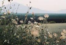 Campo / Flores silvestres...