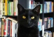 Cats / Sandman Book Company is an independently owned bookshop in Florida, managed by resident cat Kitty Wan Kenobi.  / by Sandman Book Company