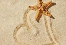 sea shells and love for sweet summer!! / you feel the summer breeze!!