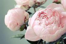 Peonies / Ranunculus