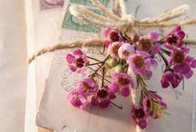 Flor-de-cera/ Wax flower