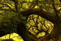 Magical Trees / Trees that could have their own beauty, mystery, souls, or magic...