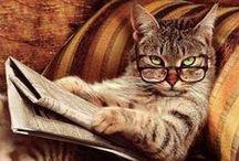cats / gatti dal vero o raffigurati