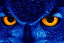 Beautifull Owls Photos
