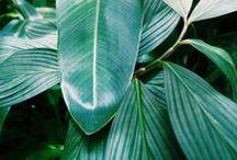 DESIGN | Plant Life
