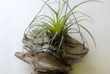Driftwood / Beautiful ideas for driftwood projects
